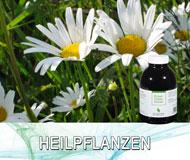 Heilpflanzen-Extrakte