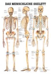 menschliches Skelett 70 x 100 cm